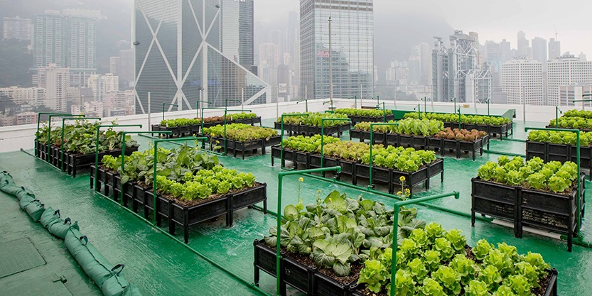Rooftop farm at the Bank of America Tower, Central, Hong Kong